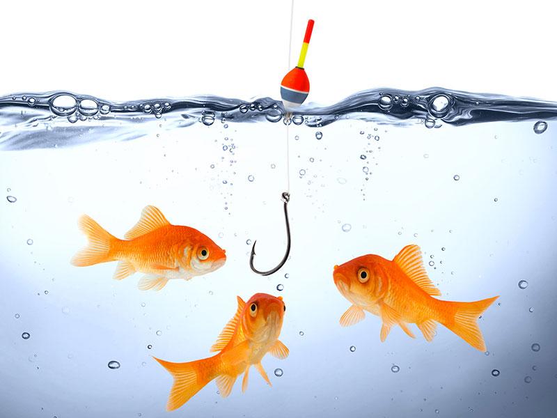 Trois poissons rouge s'avançant vers un hameçon situé près d'eux.