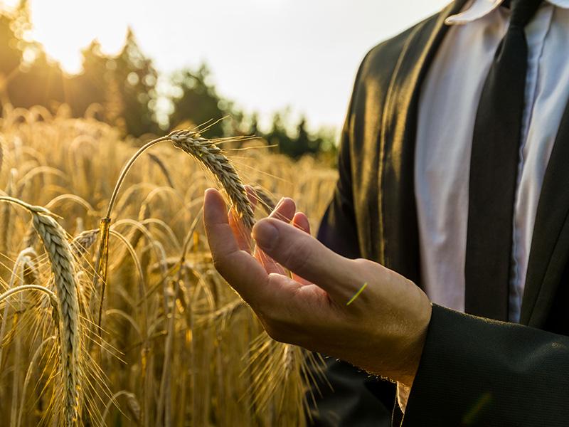 Homme d'affaires dans un champ de blé.
