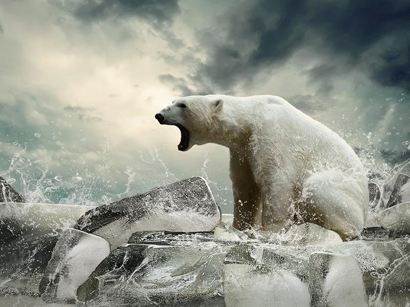 Ours blanc rugissant sur la banquise, devant la mer déchaînée.