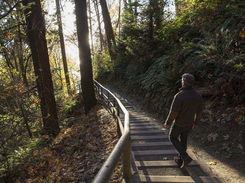 Un homme effectuant une randonnée en forêt.