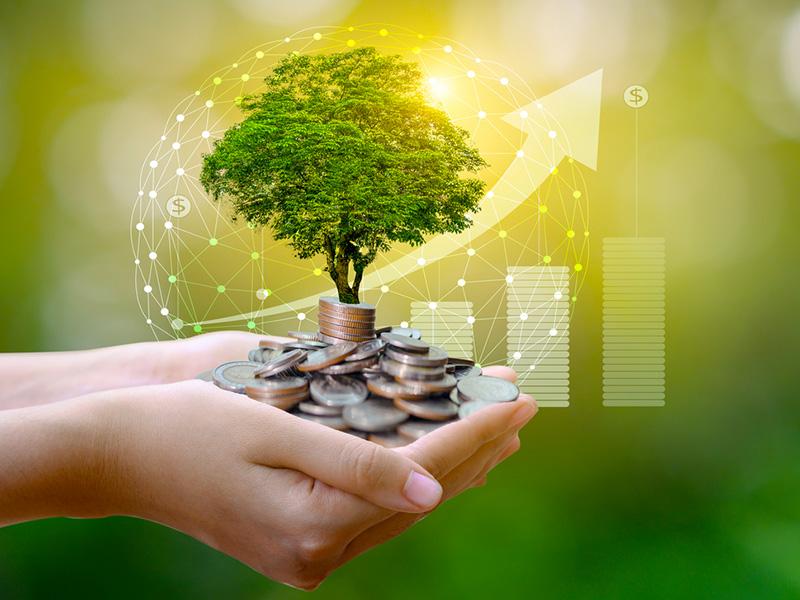 Des mains jointes tenant un arbre miniature et des pièces de monnaie.
