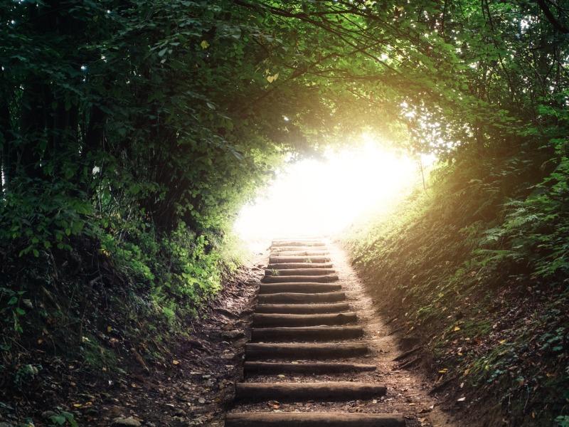 Un escaliersous un couvert de forêt menant au soleil.